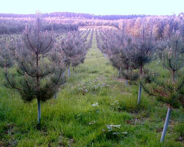 Tree Nursery, Oakmere