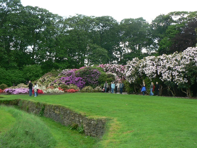 The Rhododendron Walk, Temple Newsam
