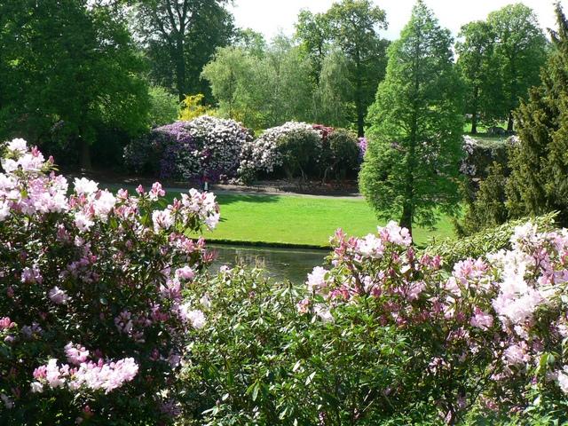 Rhododendron Walk from Elm & Oak Woods, Temple Newsam