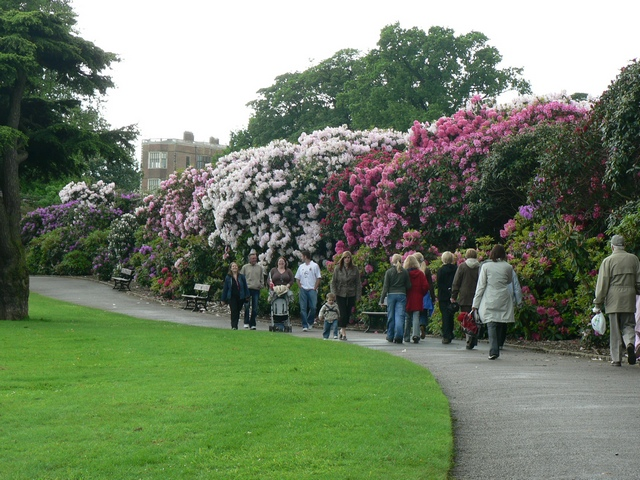 The Rhododendron Walk & Temple Newsam House