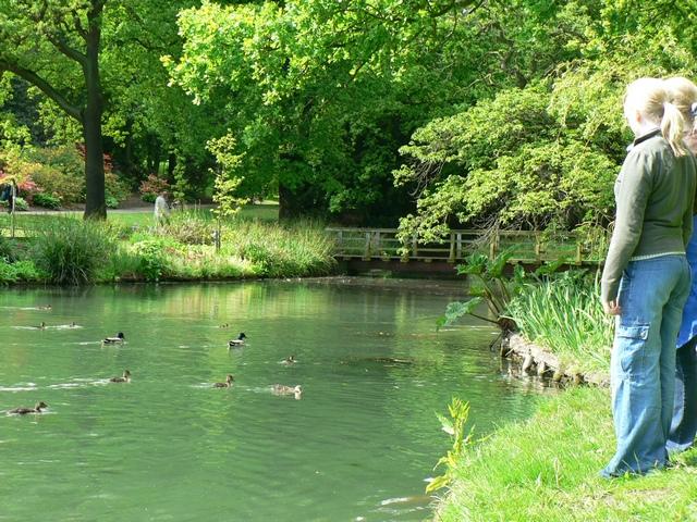 Menagerie Pond, Temple Newsam