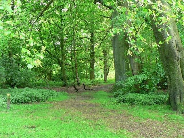 Avenue Wood, Temple Newsam