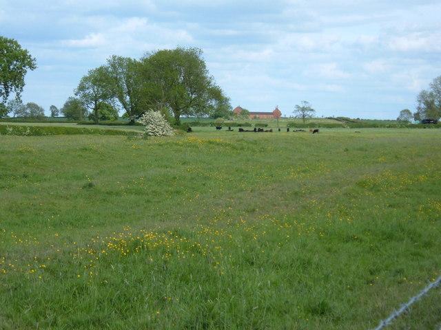 Newbold farm