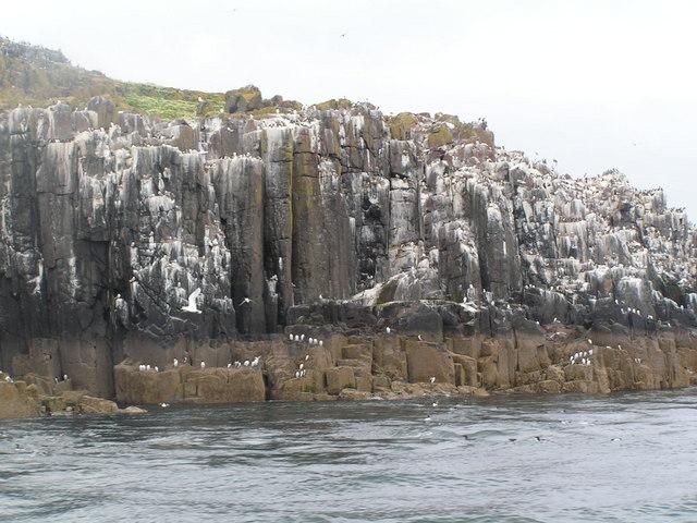 Bird on the cliff of Inner Farne
