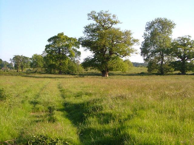Field near Island Farm, Ottery St Mary