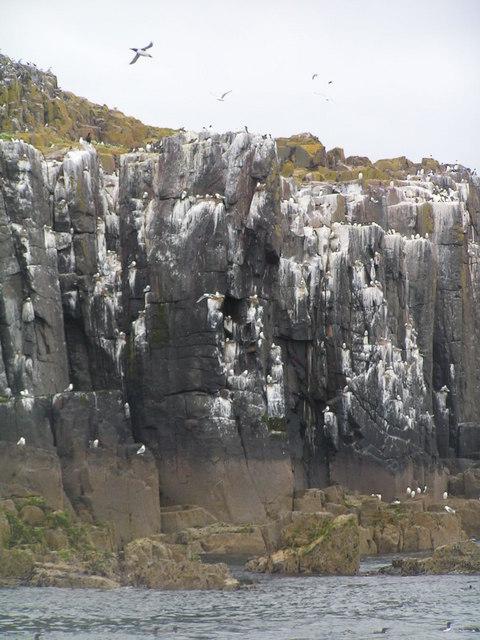 Birds on the cliff of Inner Farne