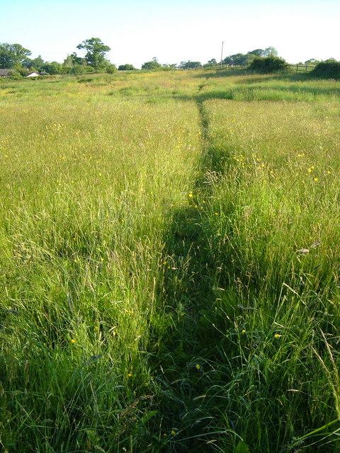 Footpath at Salston Barton