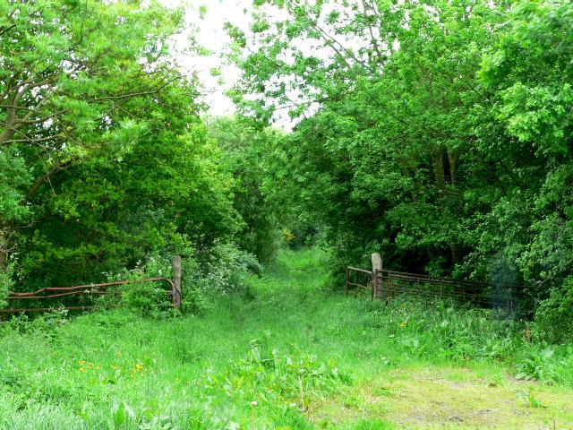 Footpath from Kidds Lane to Intakes Lane
