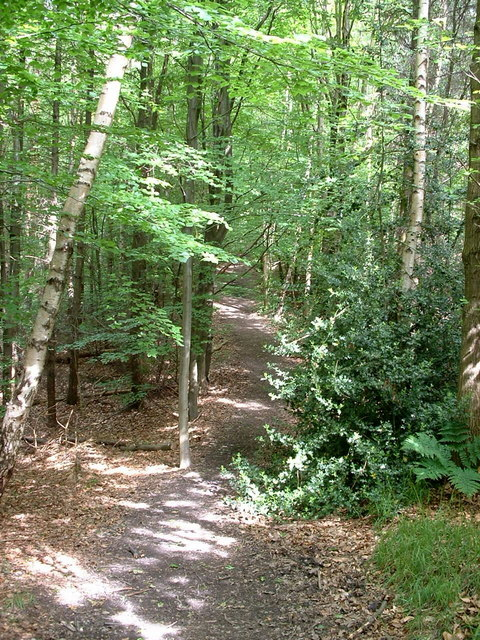 Path Through Hood Wood
