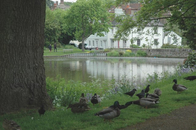 Ducks and Jackdaws feeding together at Midhurst pond.