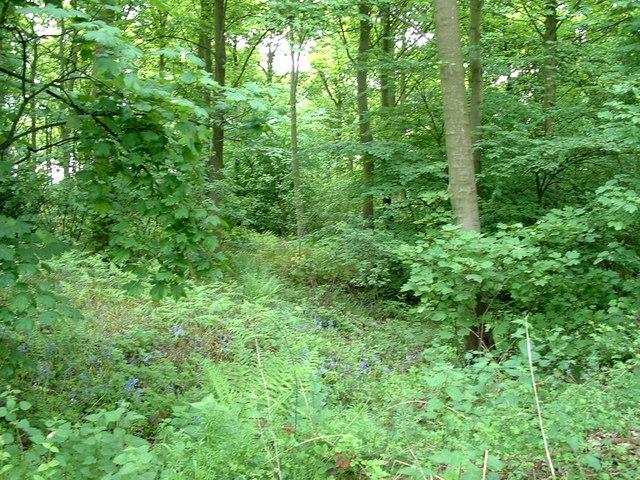 Cawthorne Park Woodland