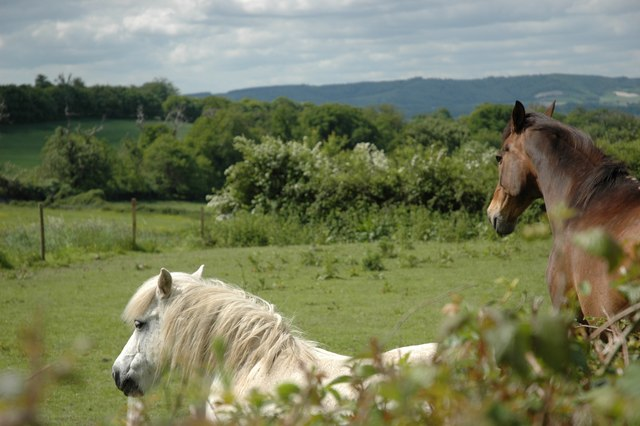 Horses checking me out, just!