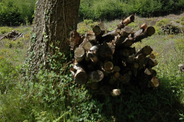 Felled wood