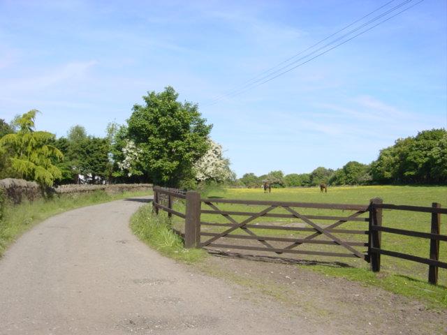 Haddon Lane, Ness