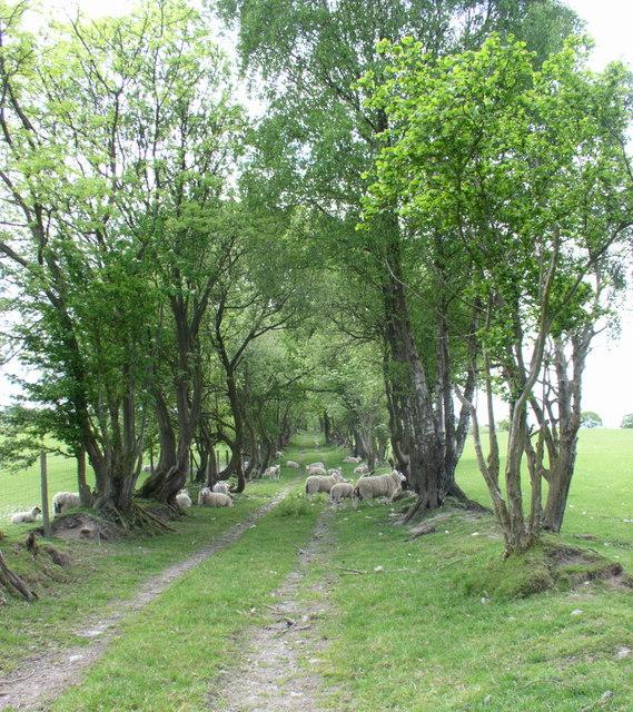 Footpath in Llanelidan