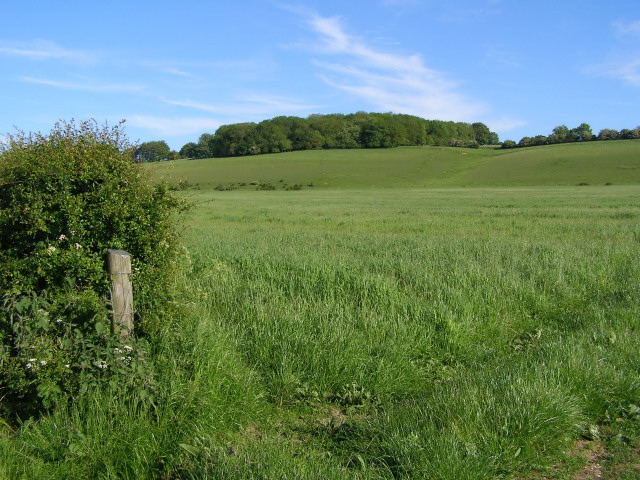 View towards Roundbushes Copse from Monarchs Way footpath