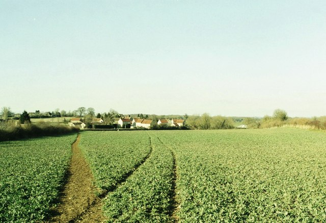 Field of crop and new housing at Rode, Wiltshire