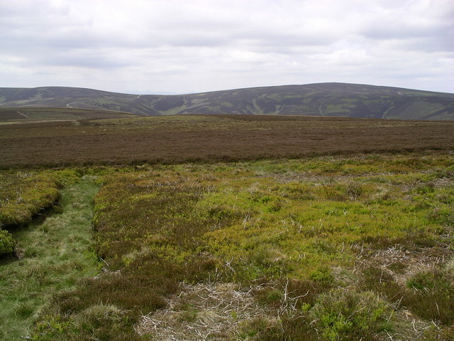 Lammermuir heather 2