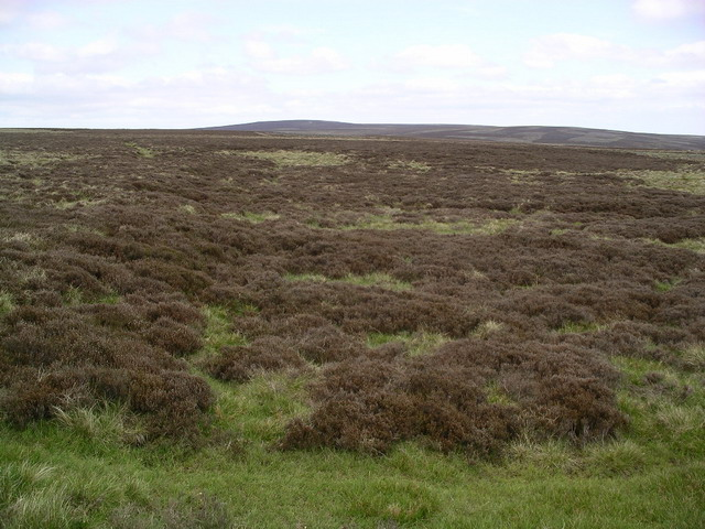 Lammermuir heather 3