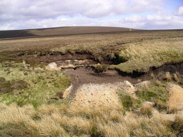 Lammermuir heather 6