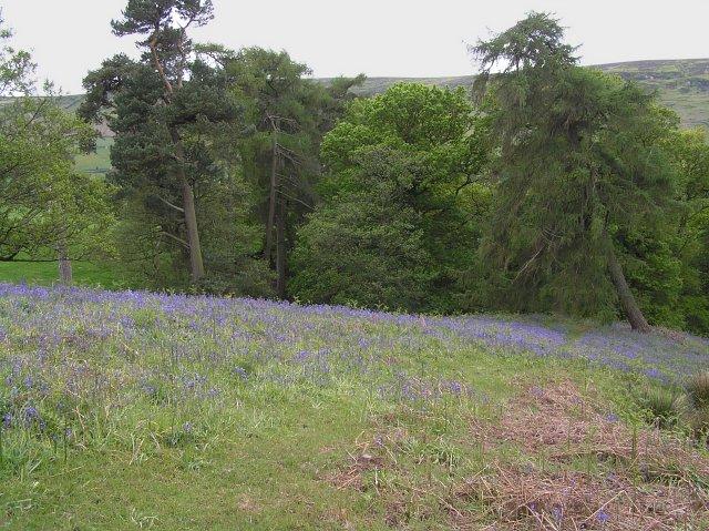 Sonley Wood