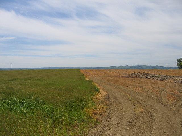 Fields on Black Martin Hill