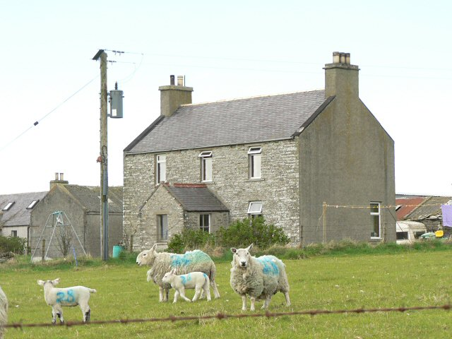 Sheep and farmhouse at Corston