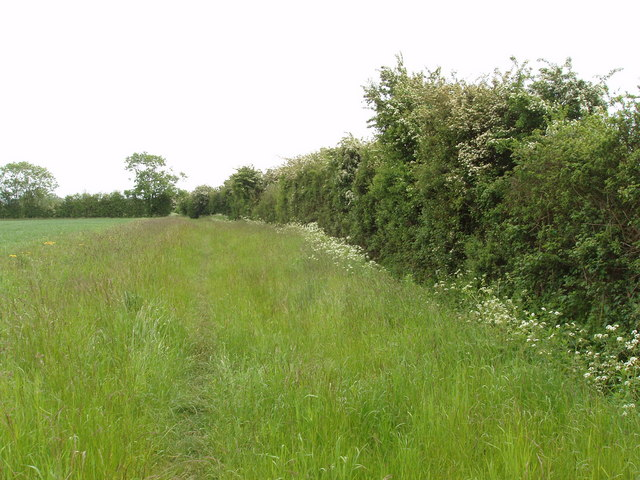 Grass edge to wheat field, Murcott