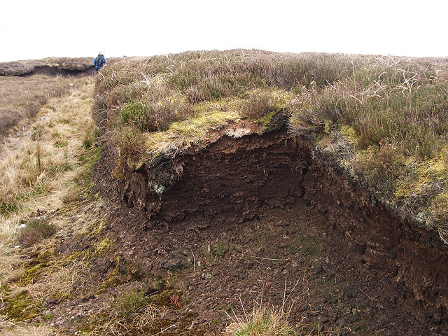 Peat cuttings