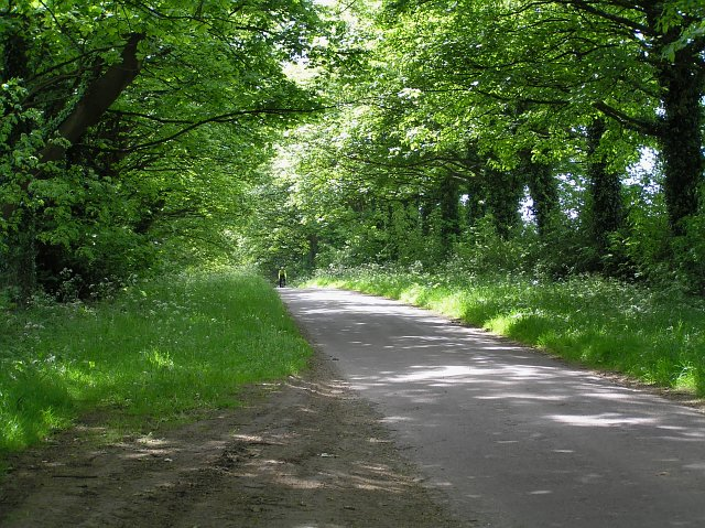 Tree-lined road to Sleightholme dale.