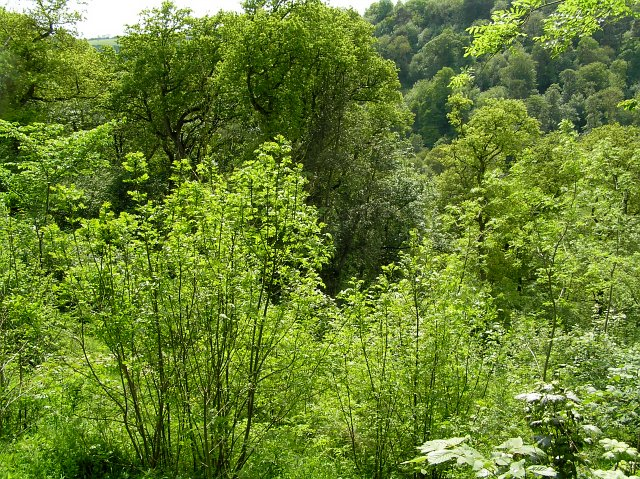 The wooded Valley at Sleightholme dale