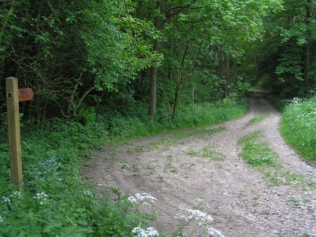 Bridleway and track off High Lane
