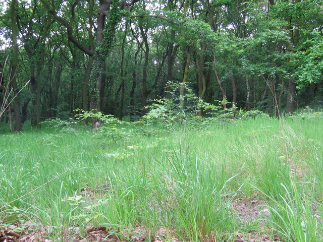 Canklow Wood