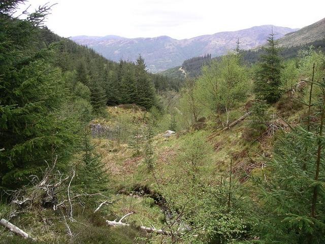 Gleann a' Chaolais forestry