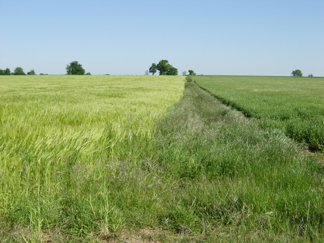 Farmland near Troston