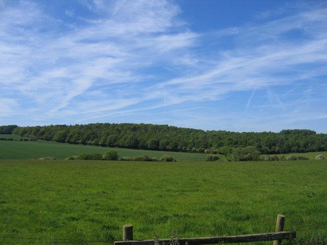 Knavenhill Wood