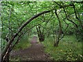 SK5244 : Footpath through Low Wood by Lynne Kirton