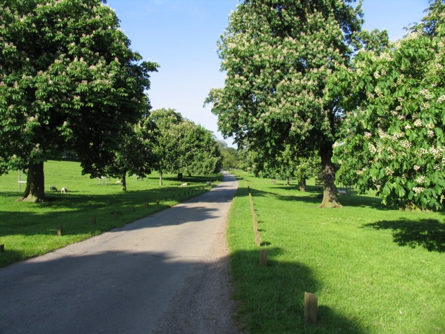 Avenue to Rolleston Hall