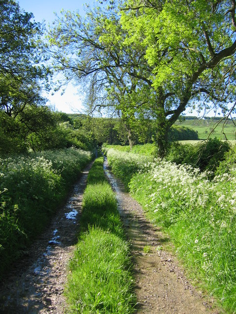 Track to Oxpasture Wood