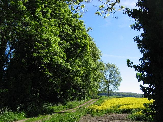 Track Near Mill Beck