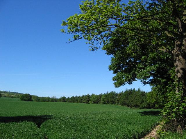 Langhill Plantation