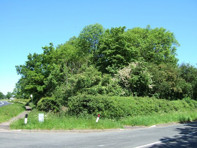 New Road Spinney near Weedon
