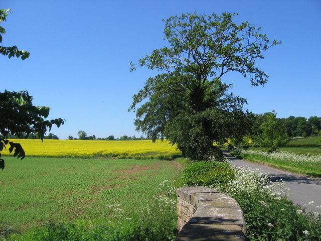 Road to Foston