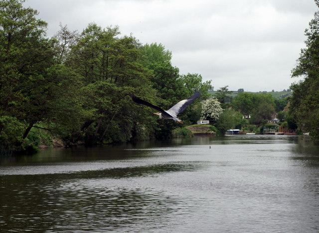 River Avon above Swineford Lock