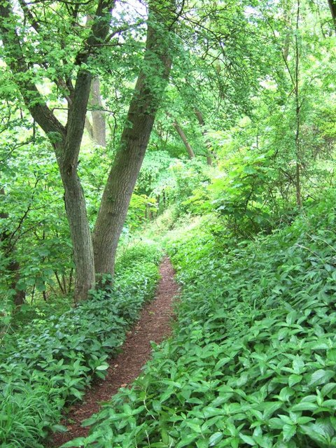 Footpath, Lineover Woods