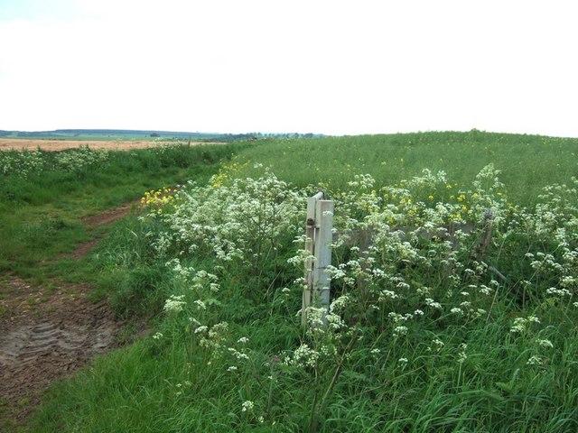 Fields near Naunton