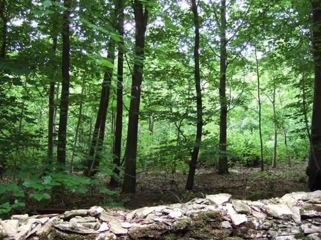 Woods alongside A436