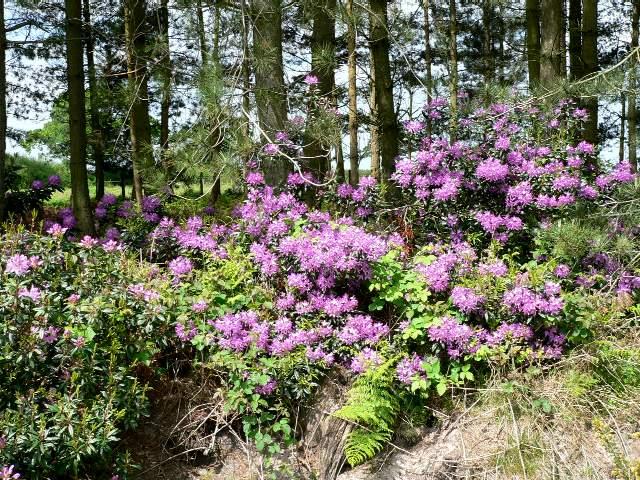 Forest Edge, Houghton Moor