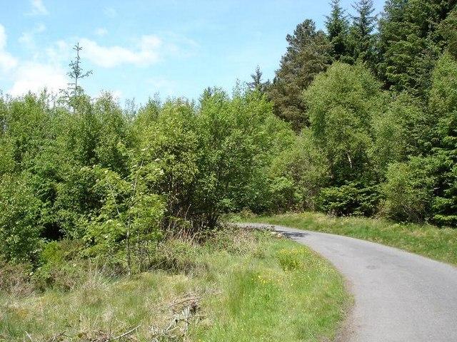 Lane to Llyn Geirionydd