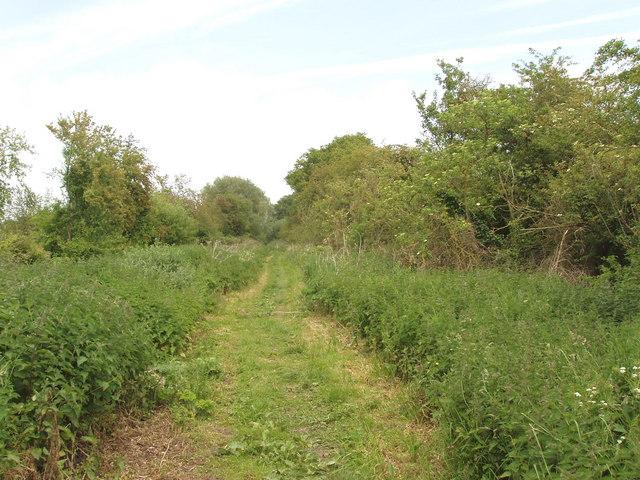 Roman road near Beckley